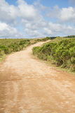Road and Araucaria angustifolia Forest Stock Photography