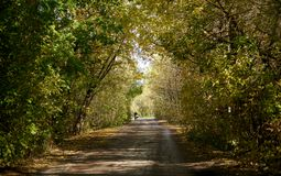 Road with an arch of trees royalty free stock images