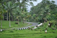 The road in the area of Bedugul Bali botanical garden royalty free stock photos