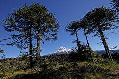 Chile Stock Photography
