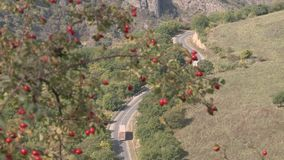 Road in Armenia with rose hip stock video