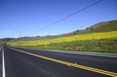 Rural road and road markings Stock Image