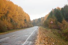 Road asphalt for cars. the senile landscape Royalty Free Stock Photo