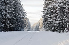 Road asphalt snow-covered and conifers Stock Photo