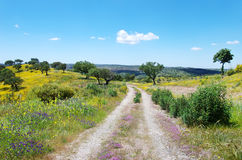 Road At Blossom Field, Portugal. Royalty Free Stock Image