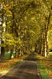 Road in autumn. A small country road in autumn Stock Photography