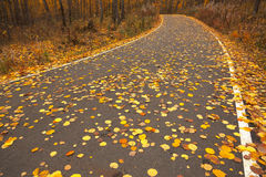 Road during autumn Stock Image
