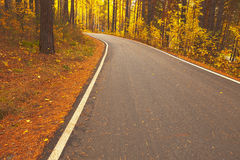 Road during autumn Royalty Free Stock Image