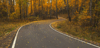 Road during autumn Stock Photography