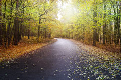 Road in autumn Stock Images