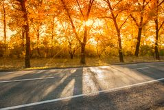 Road in the autumn afternoon with sunshine stock images