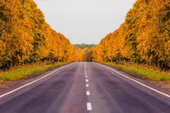 Road at autumn with alley of trees Stock Photography