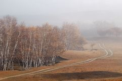 Road beside autumn birch forest in a foggy morning Royalty Free Stock Image