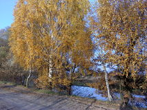 Road in autumn Stock Image