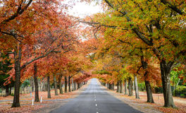 Road in autumn. Autumn colors at countryside in Australia stock photo