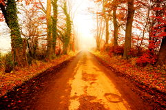 Road in Autumn fog A Royalty Free Stock Image