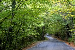 Road in autumn forest. View of road in autumn forest Royalty Free Stock Image