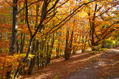Road in the autumn forest Stock Image