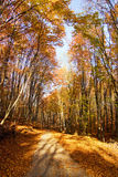 Road through the autumn forest... Stock Photos