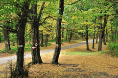 Road in autumn forest. Empty country road through trees in early autumn forest Stock Photography