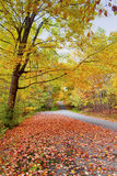Road in autumn forest Royalty Free Stock Images