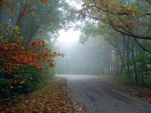 Road through Autumn forest Stock Photography