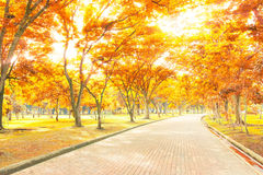 Road in the autumn forest Royalty Free Stock Photo