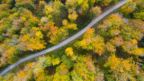Road in the autumn forest aerial photography Royalty Free Stock Photo