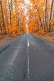 Road in autumn forest Royalty Free Stock Photo