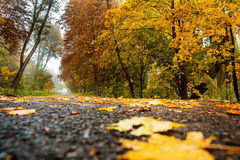 Road in autumn forest. Autumn landscape Royalty Free Stock Photography