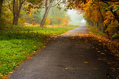 Road in autumn forest. Autumn landscape Royalty Free Stock Image