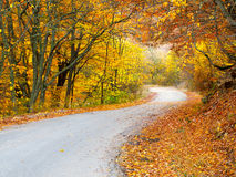 Road in the forest Royalty Free Stock Photos