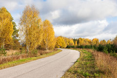Road in the autumn forest Royalty Free Stock Photos