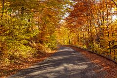 Road in autumn forest in bright sunlight Stock Image