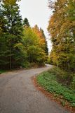Road in Autumn Forest. Autumn Forest with Colorful Leaves on Trees and Curved Road Royalty Free Stock Image