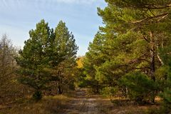 Road in the autumn forest stock photography