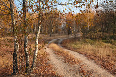 Road in the autumn forest. Gold autumn. Road in the autumn forest passes birch with yellowed leaves Royalty Free Stock Photography