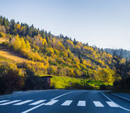 Road and autumn forest Royalty Free Stock Image