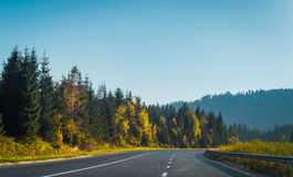 Road and autumn forest Stock Image
