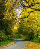 Road and autumn forest Stock Photos
