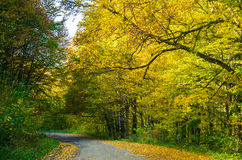 Road and autumn forest Royalty Free Stock Photography