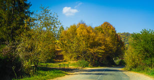 Road and autumn forest Royalty Free Stock Photos