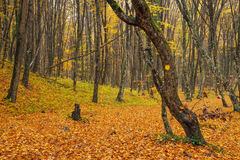 Road in autumn forest Stock Image