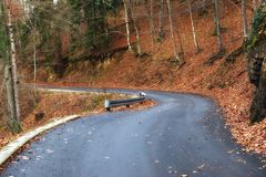 Road in autumn forest landscape Royalty Free Stock Photography