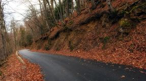 Road in autumn forest landscape Stock Photography