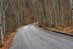 Road in autumn forest landscape Royalty Free Stock Photo