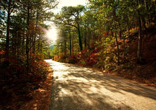 Road in autumn forest in light of setting sun Royalty Free Stock Photography