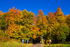Road in the autumn forest Royalty Free Stock Photography