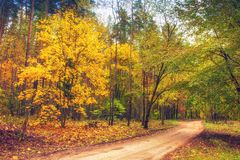 Road in autumn forest. Nature landscape. Fall. Colorful trees in forest. Yellow leaves on trees in woodland. Scenery view on autumn nature stock photos
