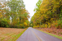Road in autumn forest. Royalty Free Stock Photo